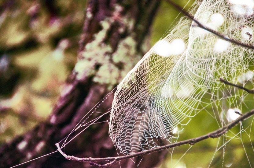 Spider Sail.jpg