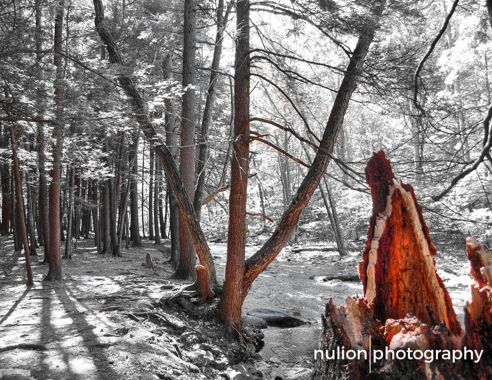 Red-Woods1
