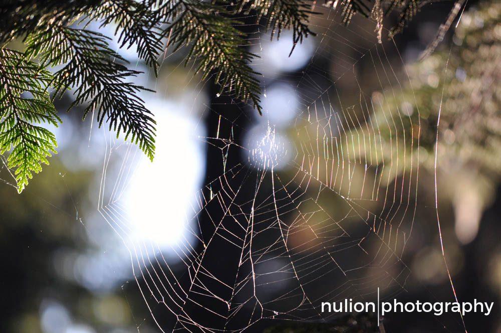Vacant-Web
