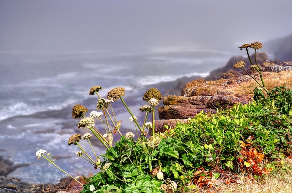 The Basalt Shores of Depoe Bay-2.jpg