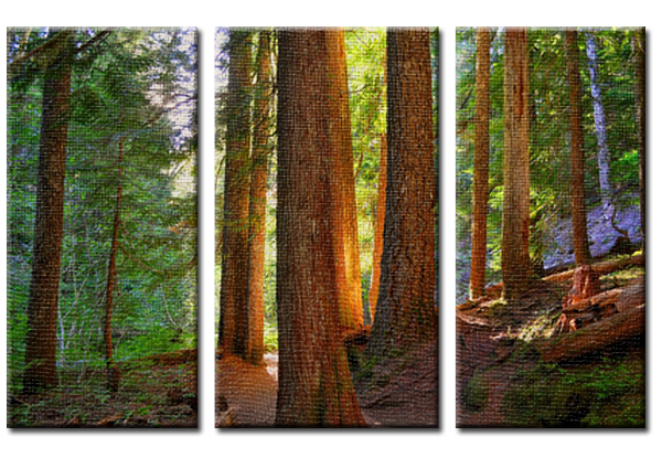 Wooden Warmth (Triptych).png
