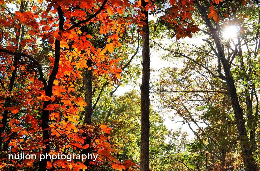 Pennsylvanian-Autumn